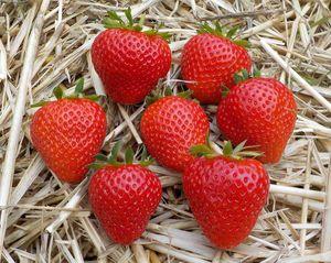 Elegance liefert sehr gleichmäßige Früchte mit guter Haltbarkeit