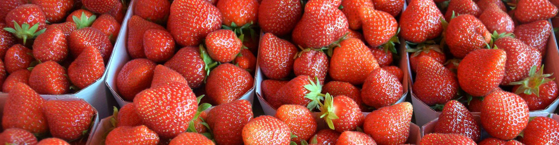 Magnum - die Premium Erdbeere