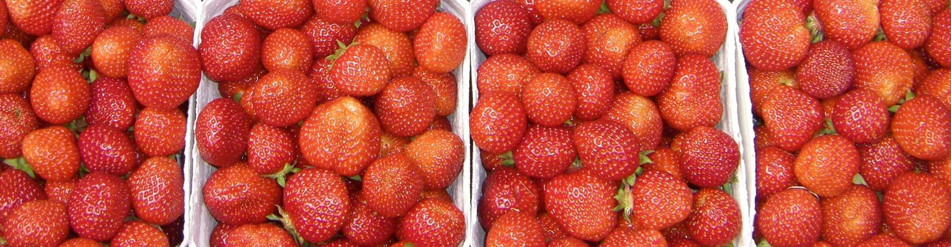 Erdbeersorte Honeoye